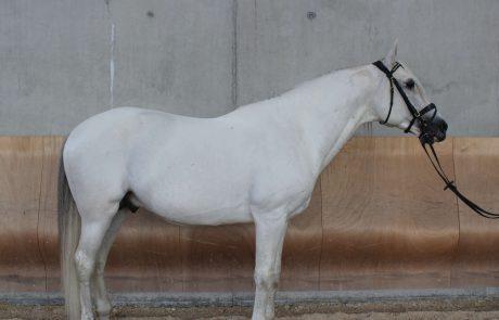 venta_de_caballos_Deleite